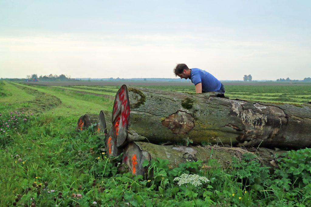Lokaal hout